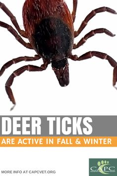 Deer ticks are a danger to pets and people throughout the year. Talk to your veterinarian about year-round prevention. CAPCvet.org