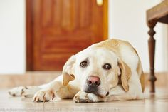 Trembling in dogs – Trembling helps relieve stress