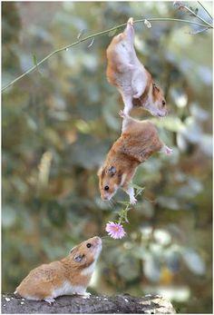 romantic animal photo