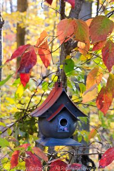 Bird House in the Fall
