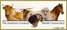 A nice witty commentary on the loss of heritage breeds.
