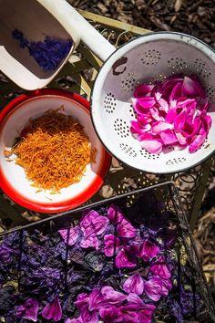Make herbal tea yourself - with three recipes to mix yourself tea benefits tea blends tea garden tea photography tea recipes Food N, Food And Drink, Herbal Tea Benefits, Herbal Teas, Herbs For Health, Dessert Cups, Tea Blends, Food Illustrations, Tea Recipes