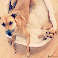 Lauren Conrad's pups, Chloe and Fitz
