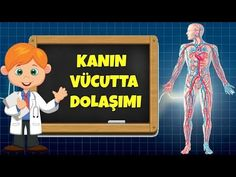 Kanın Vücutta Dolaşımı - Kids education and learning acts Easy Mother's Day Crafts, Mothers Day Crafts, Baby Songs, Kids Songs, Logic Games For Kids, Video Film, Educational Videos, Science For Kids, Fourth Grade