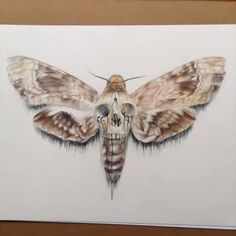 Deaths Head Hawk Moth Complete Prismacolor Pencils Limited Run Of 15  picture