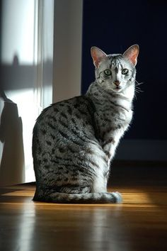 Spotted striped cats tiger