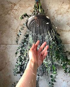 Hanging eucalyptus branches with fresh leaves on your showerhead is commonly termed as a eucalyptus shower that taps into bringing medicinal and aromatic properties of the plant to shower. Shower Plant, Eucalyptus Shower, Eucalyptus Branches, Fast Growing Trees, Smart Home Technology, Bathroom Plants, Shower Heads, Plant Decor, Bathroom Inspiration