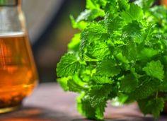 Meduňka - jak ji sklízet a skladovat + 5 domácích receptů Lemon Balm Tea, Relaxing Tea, Natural Sleep Aids, Healing Herbs, How To Make Tea, Korn, Natural Medicine, Seaweed Salad, Home Remedies