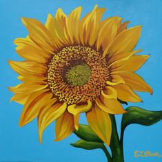 "Sunflower On Three Canvas Painting | Grand Sunflower, Original Acrylic Canvas Painting 30""x 30"" Bold ..."