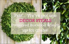 Did you miss out on our FABULOUS Preserved Boxwood Wreath? These sold out FAST...  Have we got a steal for you! We just found ONE in our warehouse and would love to give it away! If we can get 200 Repins of this post by tomorrow noon (EST) we'll set it live! Hit the Repin button ... Let's see how many Repins we can get!    #decorsteals