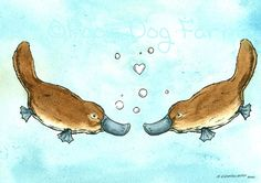 Swimming Platypus Love Original Watercolor painted by poordogfarm Cute Images, Cute Pictures, Bing Images, Cartoon Drawings, Animal Drawings, Iris Drawing, Duck Billed Platypus, Australian Animals, Watercolor Animals