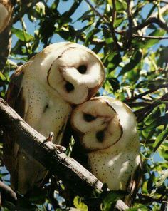 Image viaAn owl knows all the secrets of the forest, but tells them in a voice we cannot understand.Image viaBaby Owl Pictures: Photos of Cute Animals, Young OwlsImage Nature Animals, Animals And Pets, Baby Animals, Funny Animals, Cute Animals, Beautiful Owl, Animals Beautiful, Owl Pictures, Owl Photos