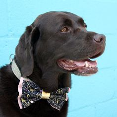 Learn how to make a stylish doggy bow tie with me and Pop Craft at an exclusive workshop on Tuesday, July 18 at East End Brewing in Pittsburgh. Durable Dog Toys, Diy Dog Collar, Healthy Dog Treats, Dog Friends, Dog Mom, Dog Training, Best Dogs, Repeat, Moose
