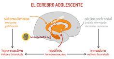 la adolescencia del cerebro | neuronas en crecimiento