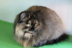 Cats Protection Bedford & Biggleswade Branch http://ift.tt/1OfV0P0
