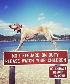 Maddie On Things – 37 nouvelles photos du chien équilibriste le plus imperturbable du net