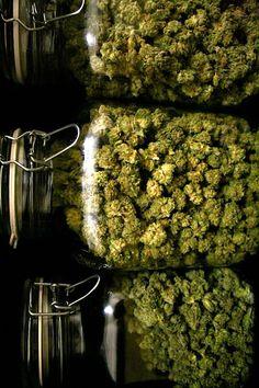 Weed - Buy Salvia and Kratom online at http://www.buysalviaextract.com http://semillasdemarihuana.com #marijuana #semillasdemarihuana #marihuana