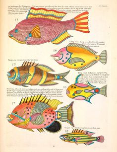 Tropical fish illustration by Louis Renard (1678–1746). From Natural Histories: Extraordinary Rare Book Selections from the American Museum of Natural History Library by Tom Baione | Brainpickings