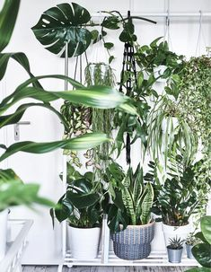 Pot plants on a plant stand and growing in hanging planters. Idea for beside wardrobe - clothes rail + step stool Shoe Organiser, Hanging Shoe Organizer, Cacti And Succulents, Potted Plants, Indoor Plants, Screen Plants, Plant Aesthetic, Best Ikea, Room To Grow