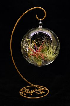 Great Mother's Day Gift - no watering! Terrarium with Airplants