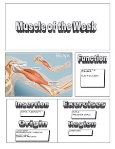 Muscle of the Week - @Dzachary21
