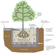 Photo: Figure College Of New Hampshire, Stormwater Center. Garden Landscape Design, Urban Landscape, Green Architecture, Landscape Architecture, Sponge City, Vertikal Garden, Tree Box, Green Street, Water Management