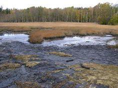 Česko, Soos - Národní přírodní rezervace
