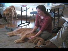 Dog Massage -- Loosening the Legs