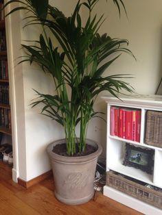 #RMhome #palm #plant #pot #rivieramaison #woonkamer