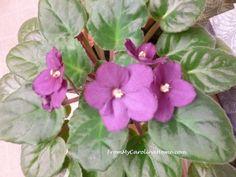 Flowers in Late November