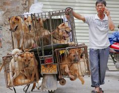Petition: Chinese dog eating festival starts in 5 weeks – take action now!