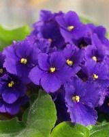 MAGIC-COLORING |Flower templates