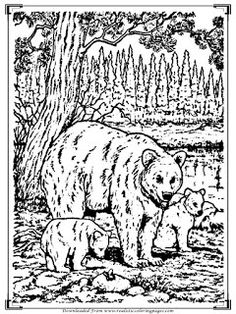 Wild Bear Adult Coloring Pages Realistic