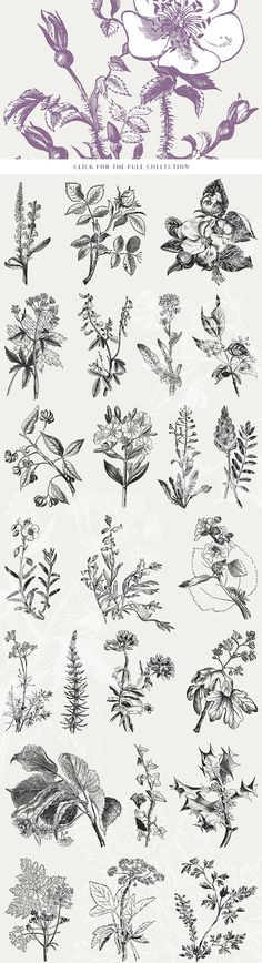 39 Plant & Flower Illustrations No. 3  -  https://www.designcuts.com/product/39-plant-flower-illustrations-no-3/