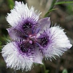 is this even a flower!! Just wow