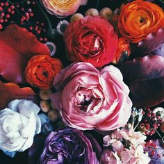 ❁•ѕρяєα∂ уσυя ωιиgѕ му ℓιттℓє вυттєяfℓу•❁ Pinterest: XperriediseX