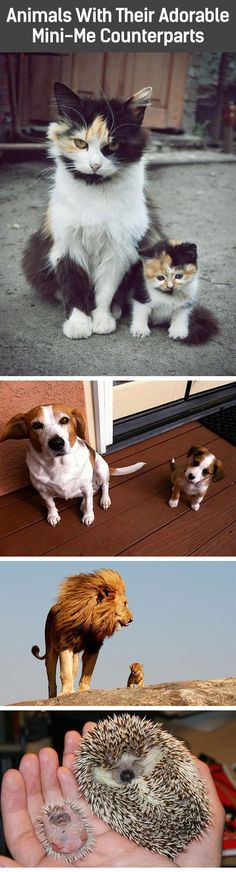 Not all dogs, but how cute?