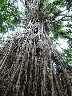 The Daintree Rainforest, Queensland, Australia