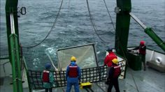 Fishing for data in the radioactive waters off Fukushima