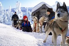 A treat for all the family, a husky sleigh ride near Rovaniemi Finland Lapland Northern Lights, Northern Lights Tours, Holidays In Finland, Santa Claus Village, Visit Helsinki, Queens, Lapland Finland, Visit Santa, 365days