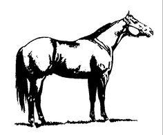 Western Halter Horse Clip Art