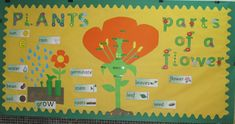Parts of a Flower Classroom Display Photo - SparkleBox