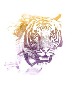 TIGER SUPERIMPOSED WATERCOLOR -  A powerful tiger, superimposed with a beautiful yellow/purple watercolor brush stroke. A well respected animal in Africa which stands for power. Tigers also find its way in our pop culture for exactly those values.  tiger purple yellow watercolor superimposed animal double exposure room hipster