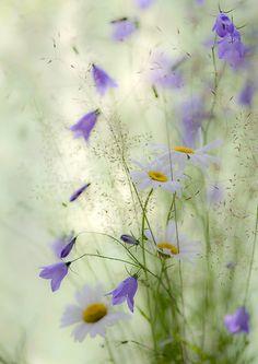 flowering bliss...