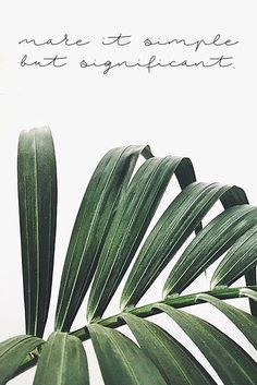 45 Ideas Photography Nature Green Tropical For 2019 Green Plants, Cactus Plants, Nature Plants, Leafy Plants, Tropical Plants, Summer Plants, Tropical Leaves, Plants Are Friends, Belle Photo