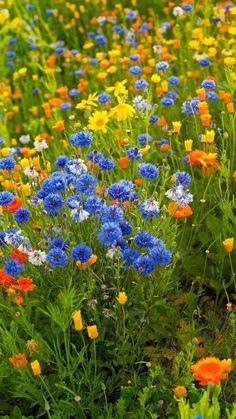 цветы Woman Shorts and Bermudas kiwi woman killed in bermuda Spring Landscape, Garden Landscape Design, Wild Flower Meadow, Wild Flowers, Beautiful Landscapes, Beautiful Gardens, Shade Garden, Dream Garden, Amazing Nature