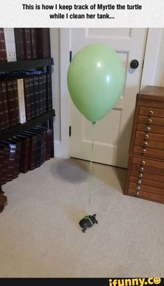 """Thls is how I keep track 0! Myrtle [he turtle while ! clean """"Erlank... – popular memes on the site iFunny.co #animals #animalsnature #thls #how #keep #track #myrtle #turtle #while #clean #erlank #pic Tortoise House, Tortoise Habitat, Turtle Habitat, Tortoise Care, Turtle Aquarium, Turtle Pond, Aquarium Fish, Cute Funny Animals, Cute Baby Animals"""