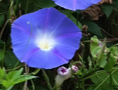 """""""Gratitude-Lesson 3 from the Garden"""" from my friend Ellen Zimmermann, herbalist."""