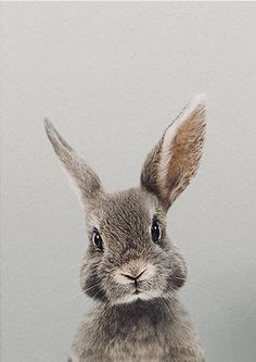 Have a very happy Easter and beautiful Sunday with your family and friends. And I hope the bunny the was generous Bunny Painting, Bunny Drawing, Bunny Art, Rabbit Pictures, Animal Pictures, Lapin Art, Rabbit Art, Animal Faces, Cute Baby Animals