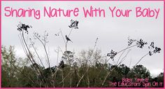Take a Bird Walk with your baby or toddler.  Sharing Nature with your Baby and learning Baby Sign Language.